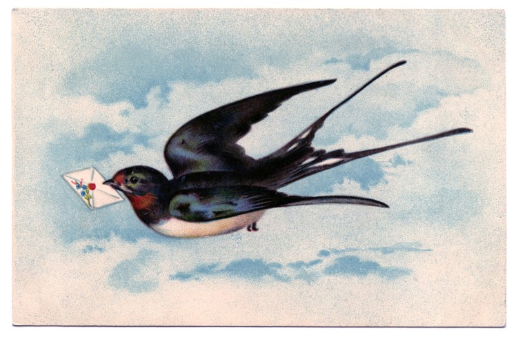 swallow-Image-Graphics-Fairy2