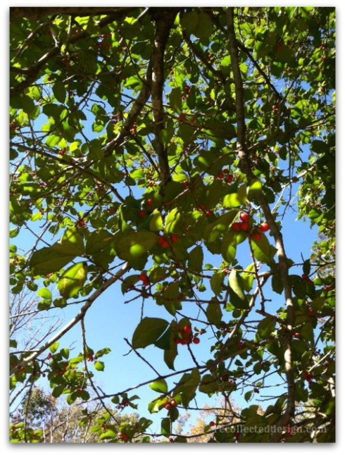 wm leaf sky