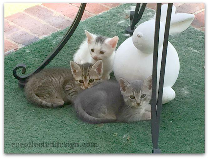 wm kittens!