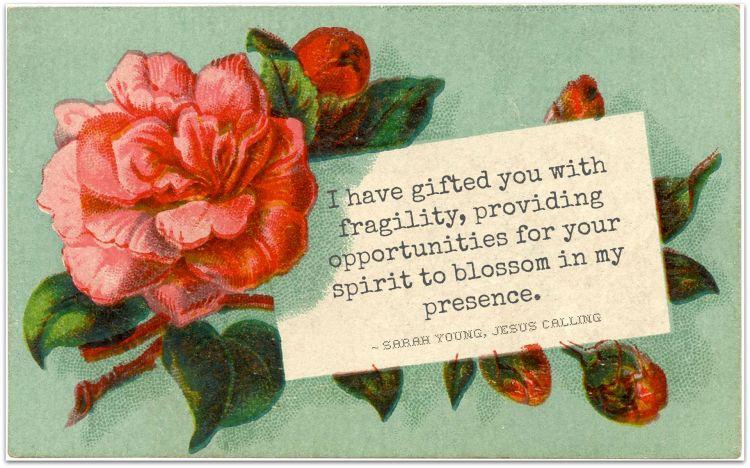 fragile flower