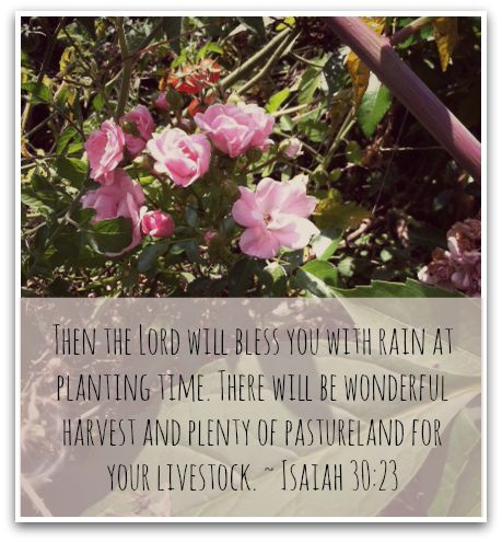 bless you with rain
